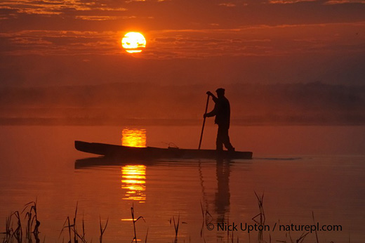 Traditional fishing punt at sunrise, Biebrza Marshes, Poland. May 2008.