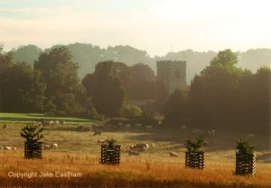 Looking towards the church at Dinton Park
