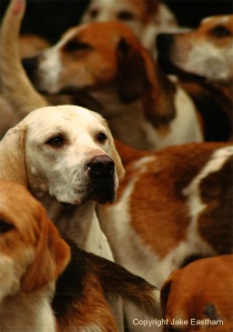 The Odstock Hounds at a meet