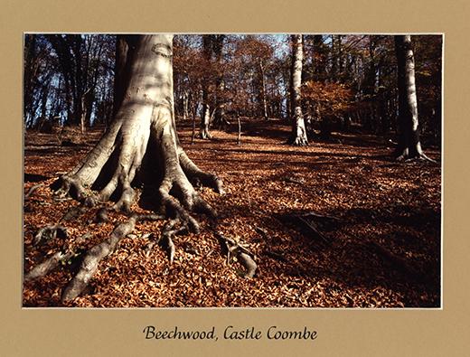 beechwood-castle-combe