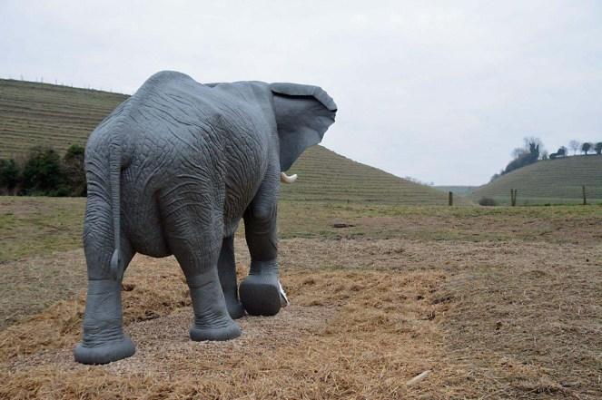 elephantcoombe1